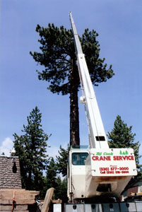 Crane attached to tree