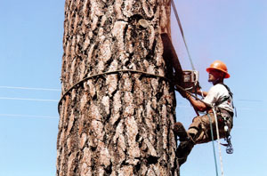 Worker on tree
